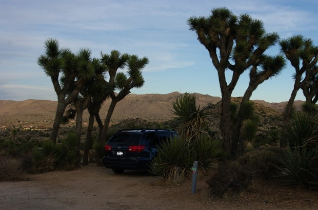 Rocky dwarfed by J-trees at our first campsite.