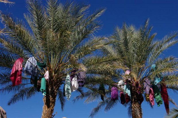 Colorful date palms at China Ranch.  Try the date nut bread.