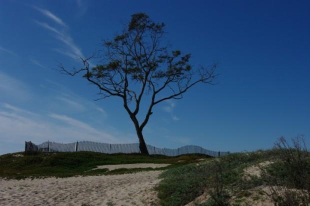 Beach tree.