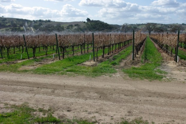 A vineyard on the east side.
