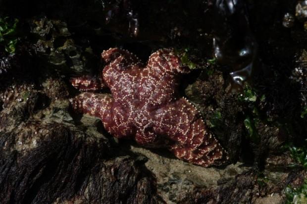 A star fish!