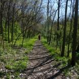 Trails on Kelleys Island.