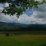 More pasture.