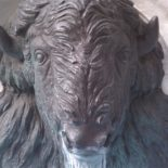 Bison, Monument Circle.