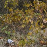 Pitchin' Empties: Not Litter. They're recyclable.
