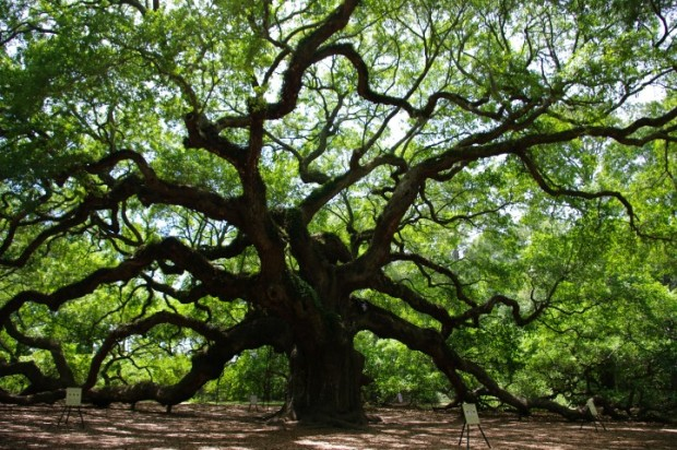 The nearby Angel Oak is worth a visit - estimated to be 1,500 years old, the size of this tree will stun you.