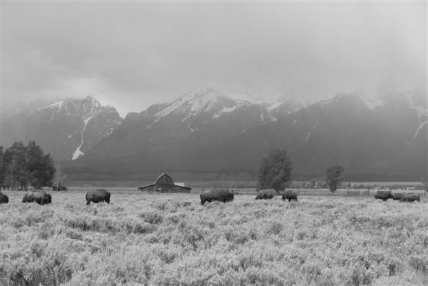 Buffalo, barn, (base of) Tetons.