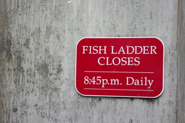 """Sorry fish, it's 9pm, there'll be no more using the fish ladder tonight."""