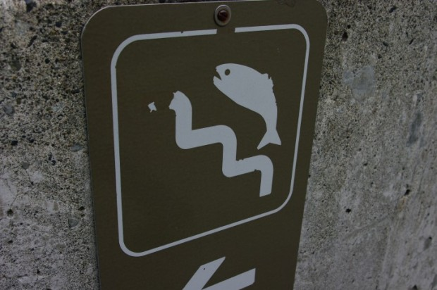 A sign directing fish to the fish ladder.