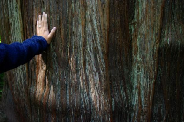 Paul and a centuries-old cedar.