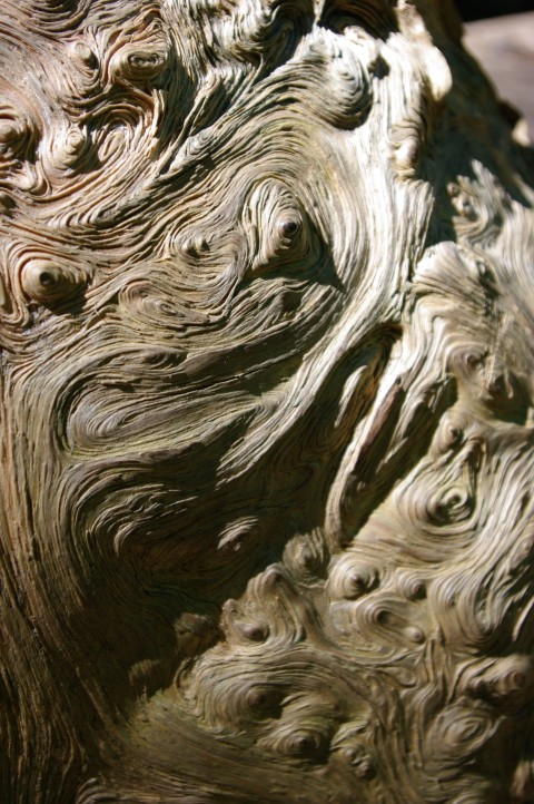 Gnarled wood on a downed tree.