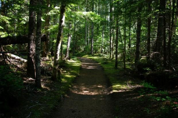 Quiet trails through the woods.