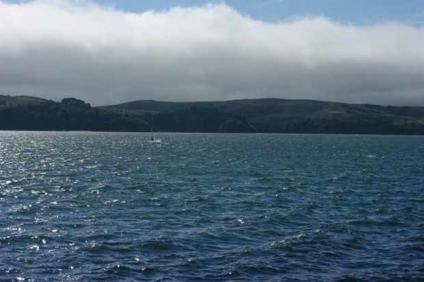 A windsurfer racing me along Tomales Bay.