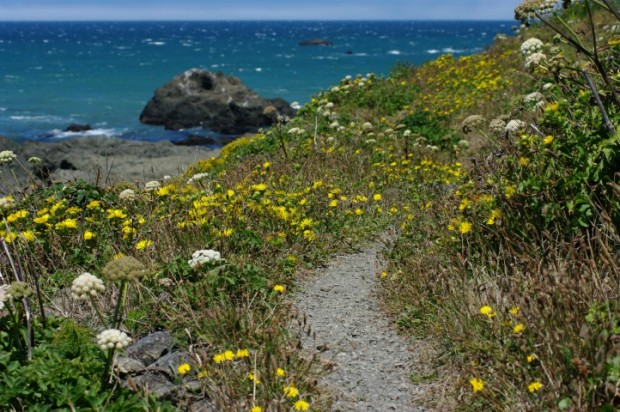 Trail along the coast.