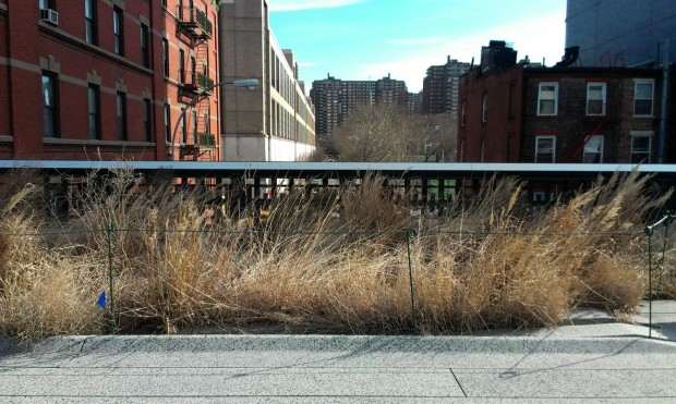 High Line Park is not wide.